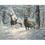 Winter Lace by Mark Keathley