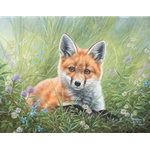 Curious Kit by Abraham Hunter - Gallery Wrap