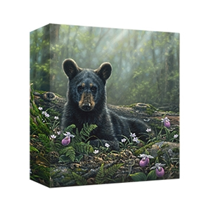 Curious Cub by Abraham Hunter - Gallery Wrap